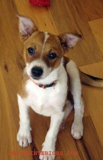 Keiki as puppy 1